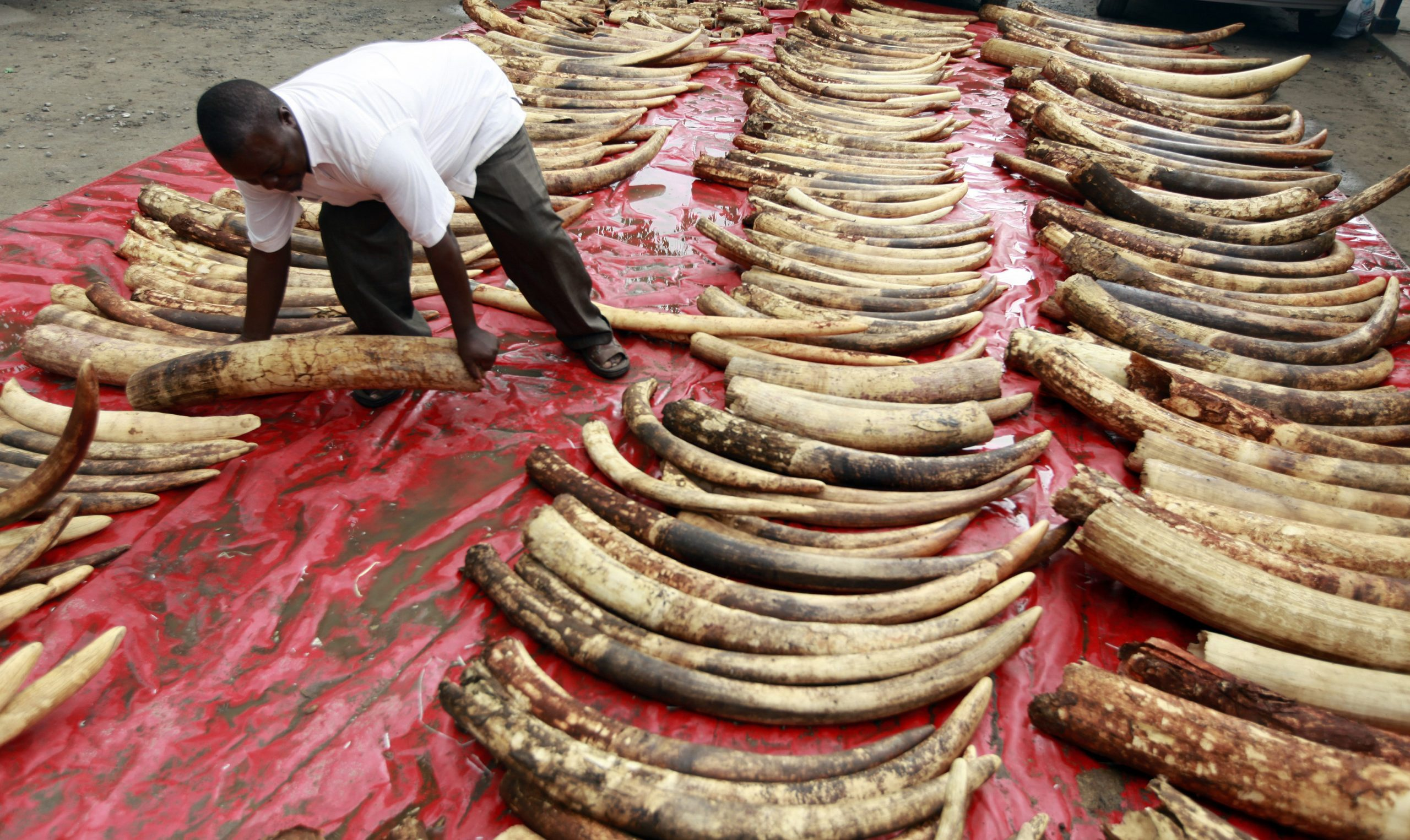 Wildlife trade: A reason for spread of COVID19
